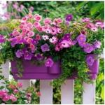 India Desire : Get Flat 83% Off Plant Seeds Just At Rs 49 Only From Flipkart